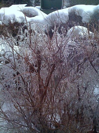 Eingefrorener Busch
